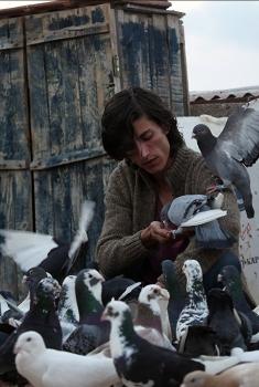 Güvercin (2018)